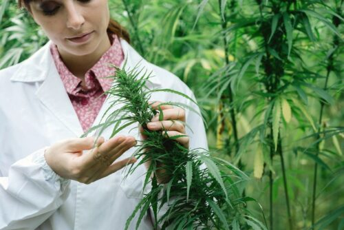Marijuana Growers Contact Mailing List and Email Database